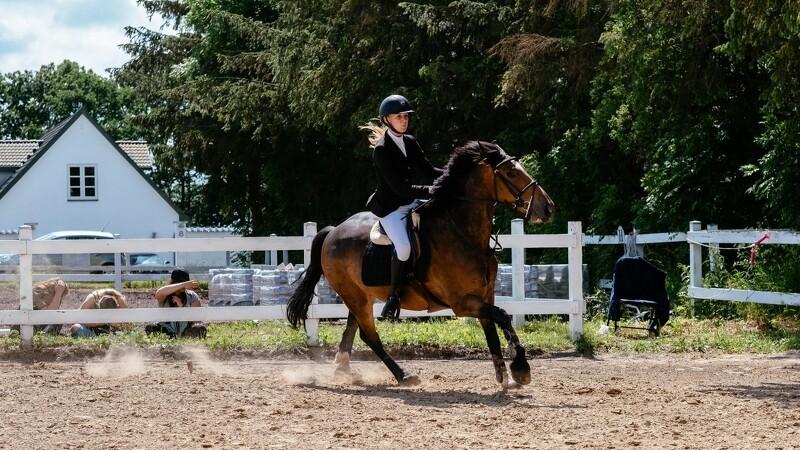 Ny app kan hjælpe din hest med at undgå skader