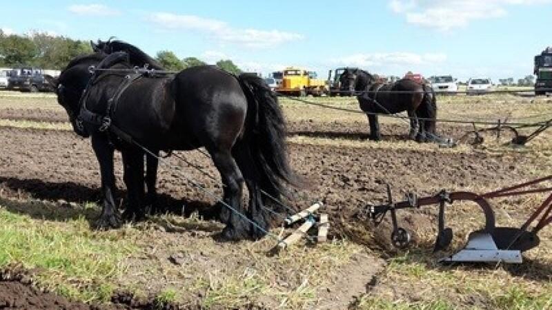 Kamp om mesterskabet i pløjning med heste