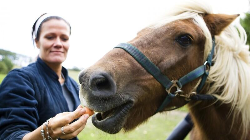 Her er smagen din hest elsker