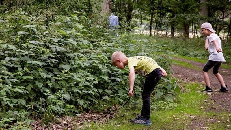 Gå på jagt efter frø til nye træer