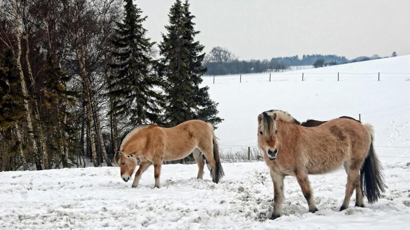 Passer du din vinter-hest korrekt?