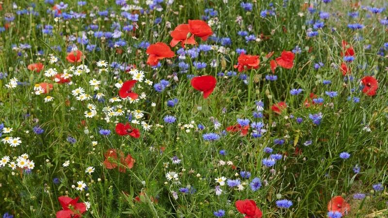 Blomstermarker slår rekord