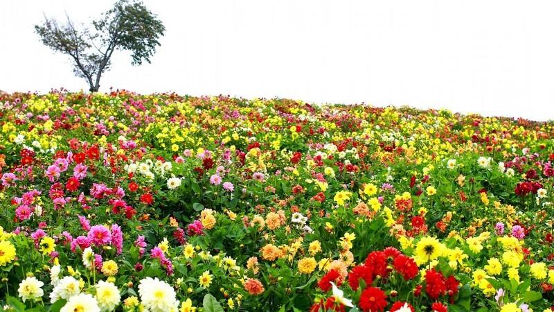 Her kan du gratis bytte blomster