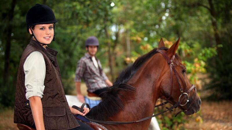 De fleste heste har passet på plads