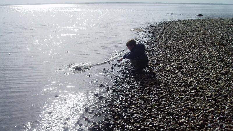 Mere liv i farvandene