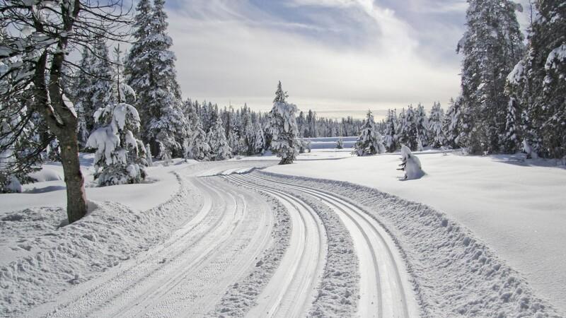 Stå på ski i skovene
