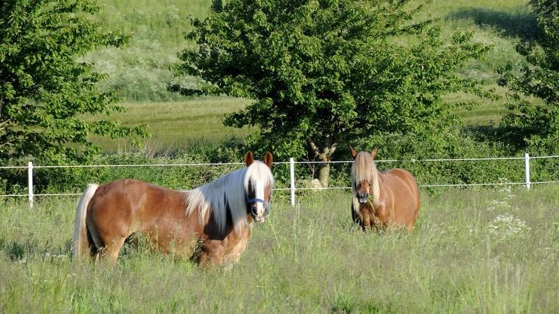 Stor stigning i tilskud til gamle hesteracer