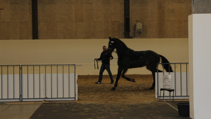 Tag med på et besøg i stalden ved Herning Horse Show