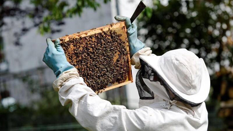 Se hvor du kan blive økologisk bi-avler