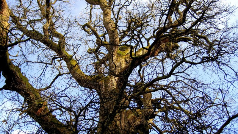Spejdere freder 2000 livstræer