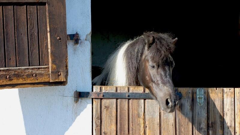 10 billige husholdningsting til hestestalden
