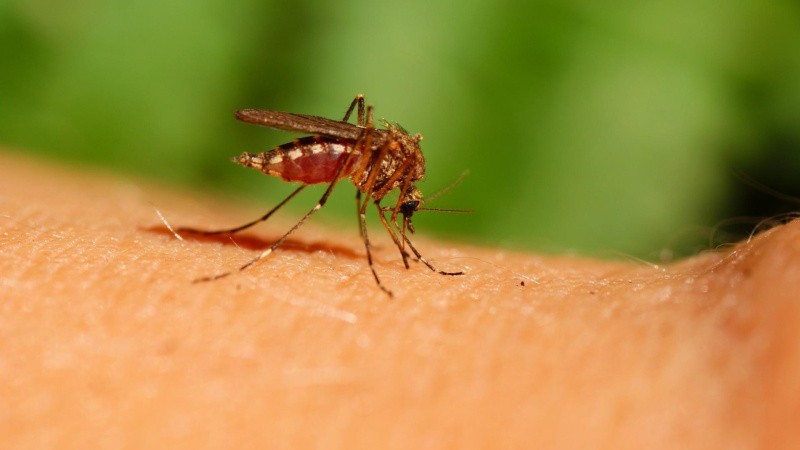 Pas på de livsfarlige myg
