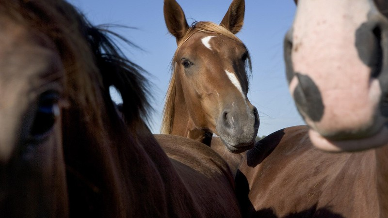 Heste kan være en dyr fornøjelse