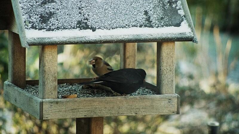 Foderbrættet kan gøre fuglene syge