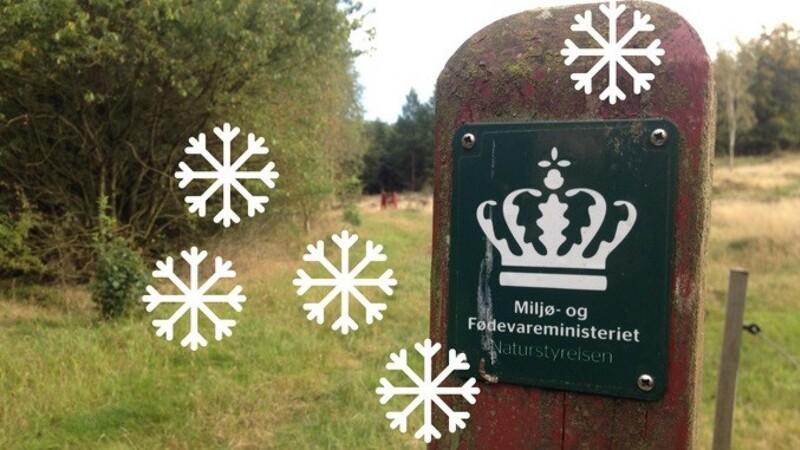 Find årets julepynt i naturen