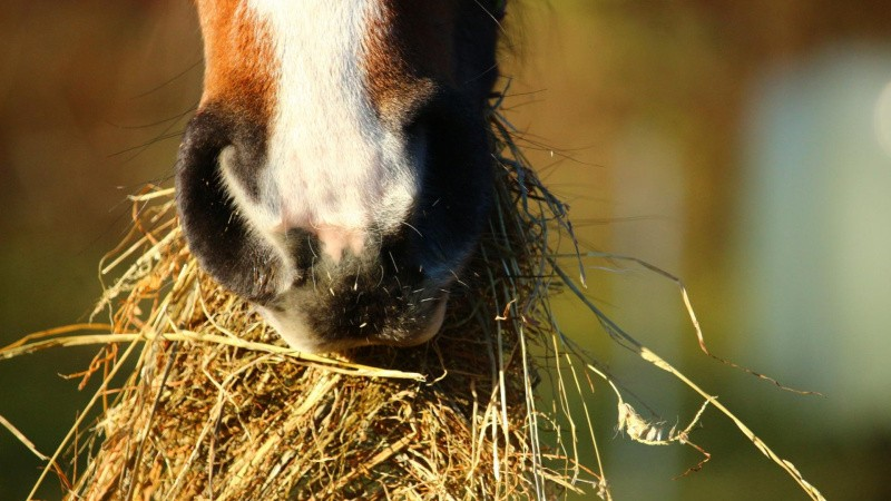 Sådan fodrer du din hest, så den bliver gladere