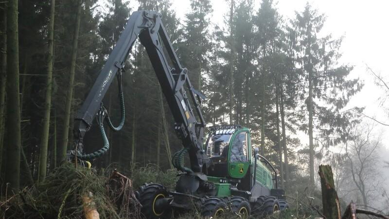 Skovning bliver overset