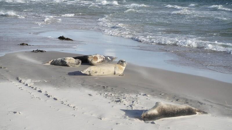 Sæler skal også slappe af