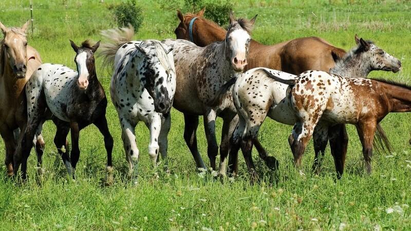 Græsmarkens ABC for hestefolk