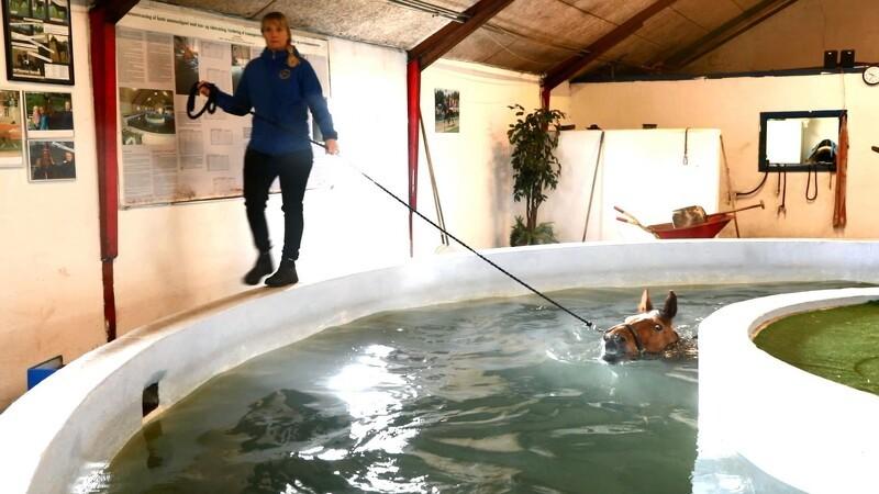 Giv din hest et besøg i poolen