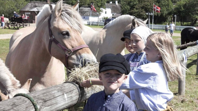 Fokus på hesten
