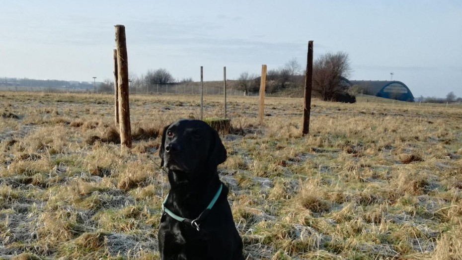 Fire Nye Hundeskove I Ar Fritidsmarkedet