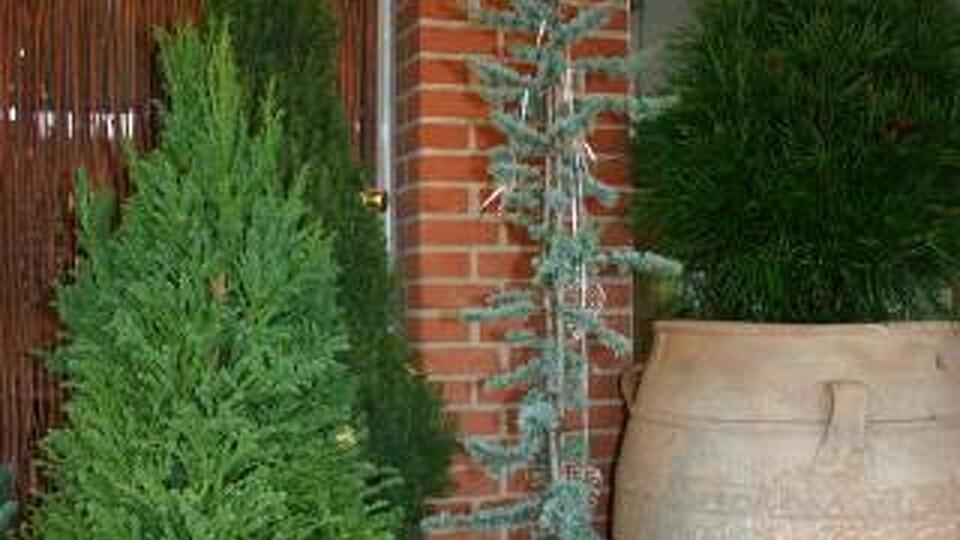planter i krukker vinter