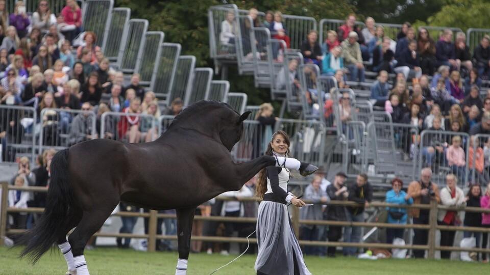 store heste